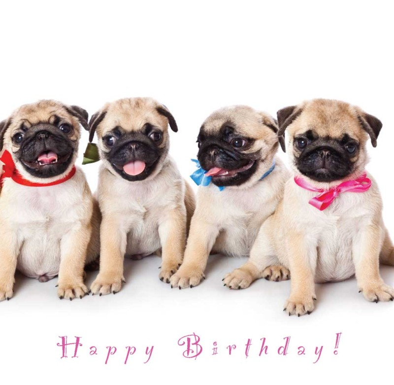Funny Pugs Images Pug Card For My Moms Bday Hd Wallpaper And