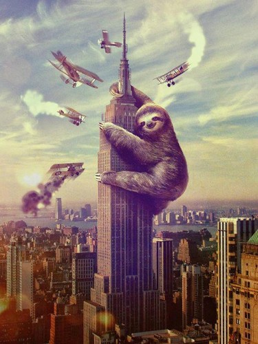 king kong sloth