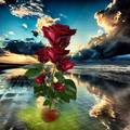 red roses in blue clouds - flowers photo