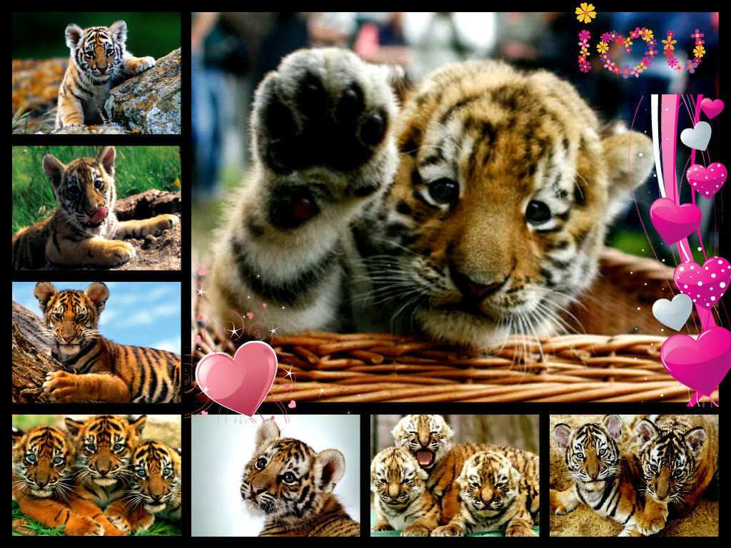 Cute Tiger Cub Wallpaper