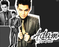 Adam Lambert! - adam-lambert wallpaper
