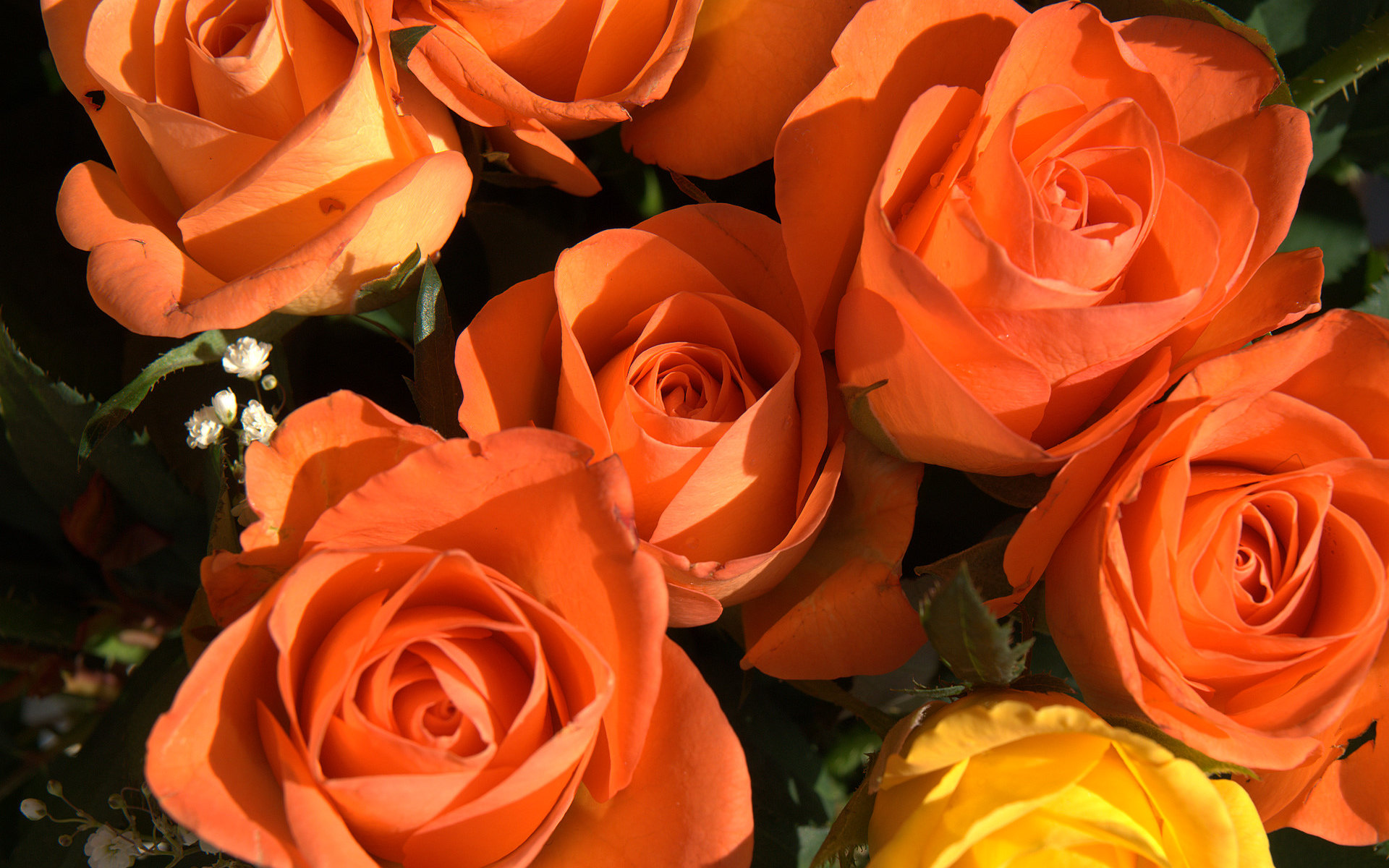 Roses Awesome Orange RosesOrange Roses Wallpaper