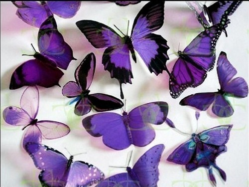 Colors wallpaper possibly with a rose entitled Beautiful Purple Butterfly