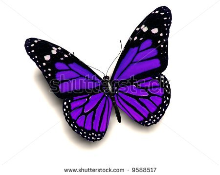 Beautiful Purple vlinder