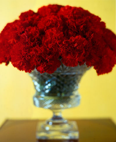 Beautiful Red Carnation