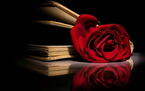 Beautiful Red गुलाब