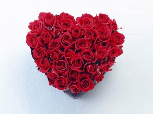 Beautiful Red Rosen
