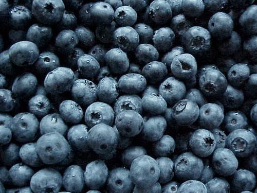 Blue 蓝莓
