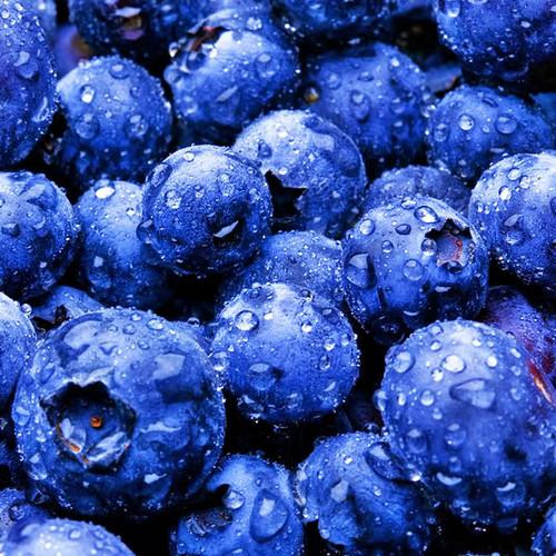 Blue mirtilo