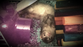 Hershey - ferrets photo