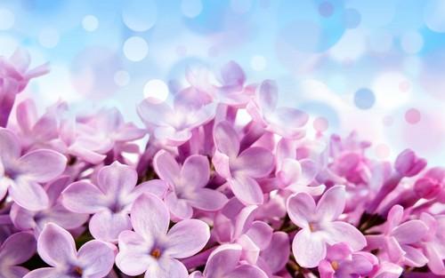 بان پھول