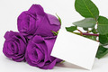 Magnificent Purple Roses - roses photo
