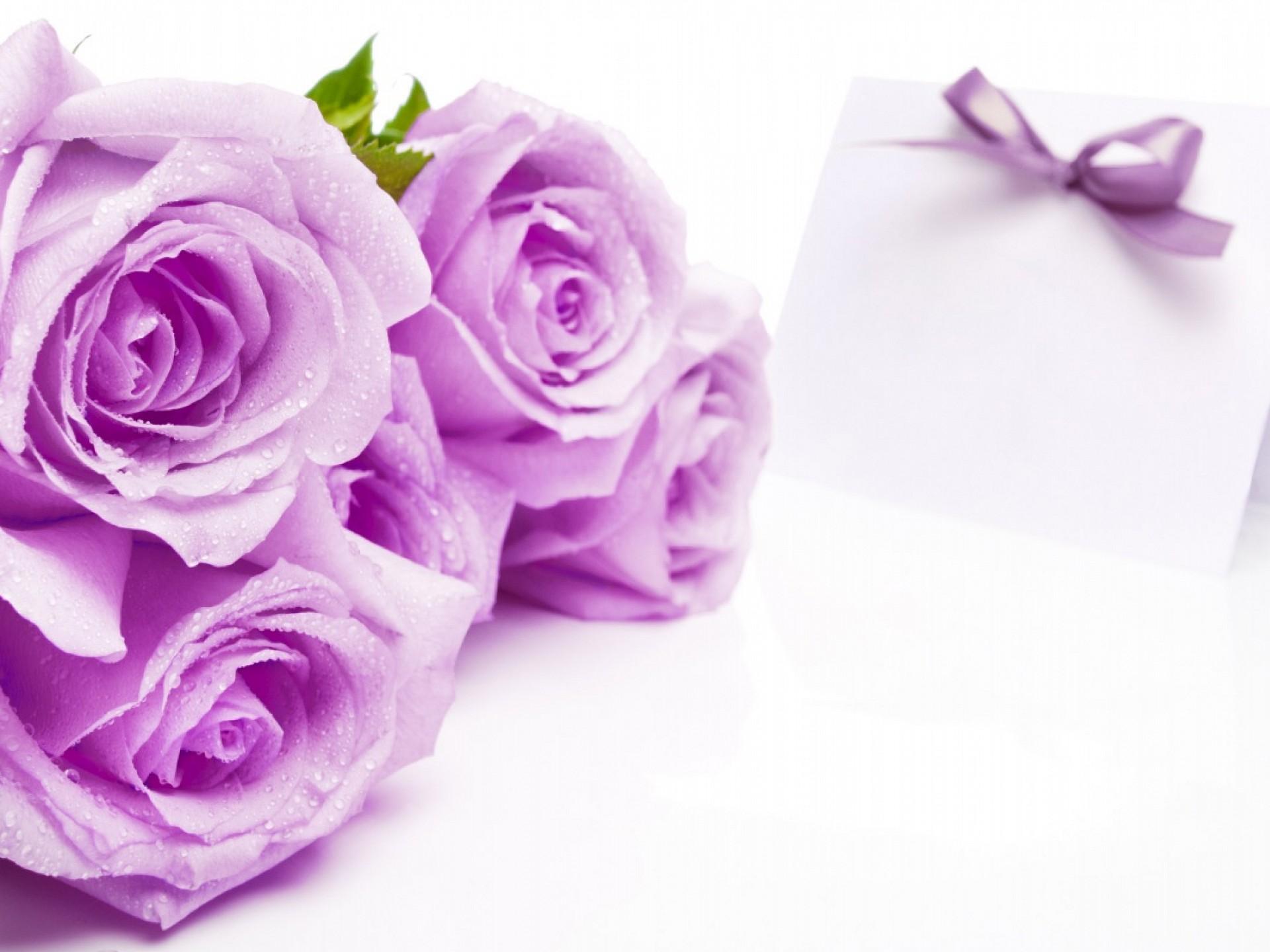 Magnificent Purple Roses