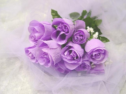 Roses wallpaper containing a rose, a bouquet, and a camellia titled Magnificent Purple Roses