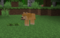 Minecraft Kate loup Texture
