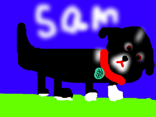My dog sammy