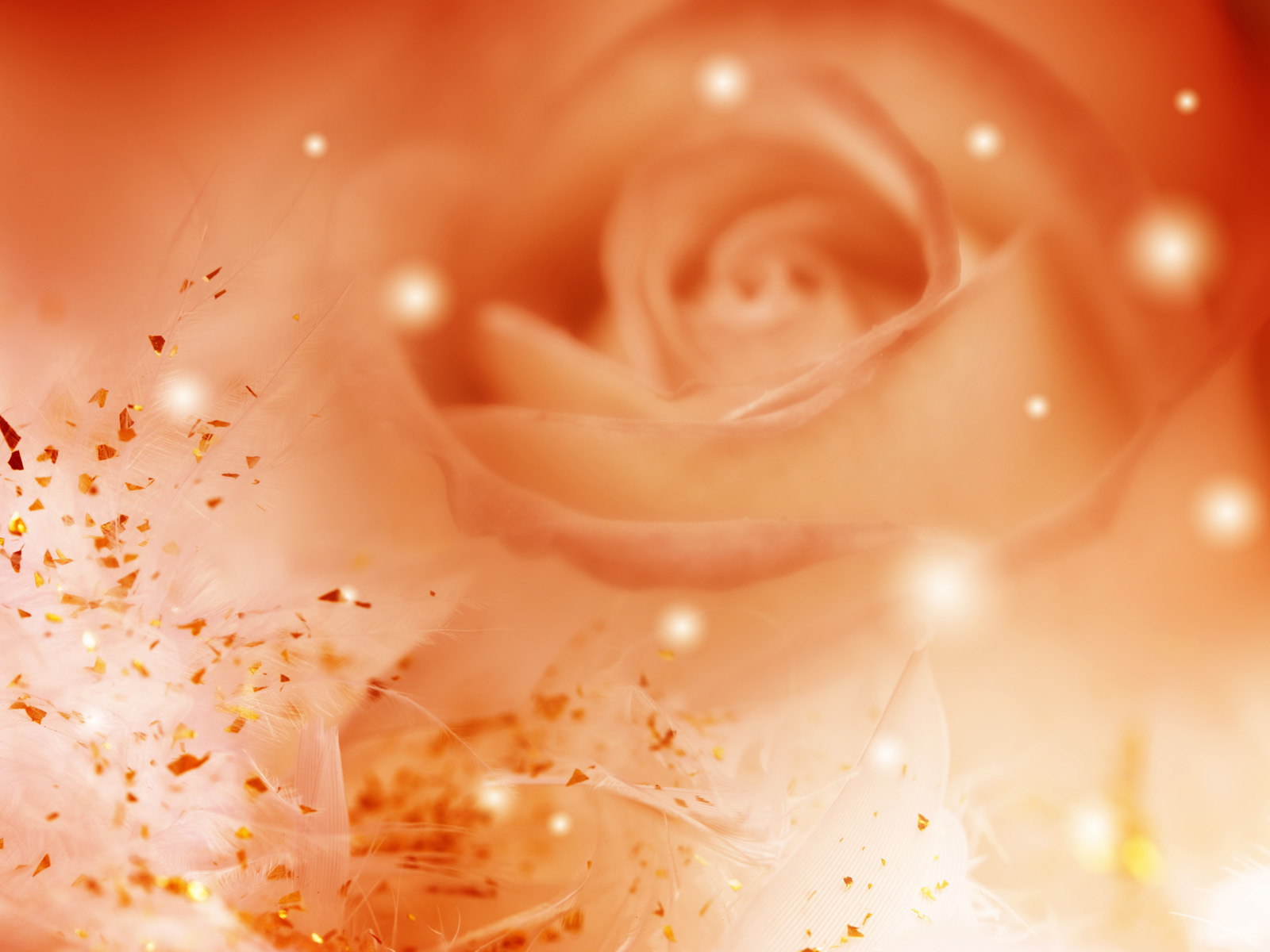 Flowers Images Orange Roses Hd Wallpaper And Background Photos