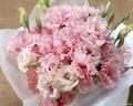 گلابی Carnation