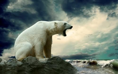 Polar menanggung, bear