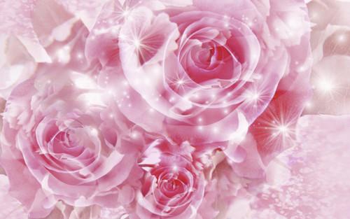 Pretty berwarna merah muda, merah muda mawar