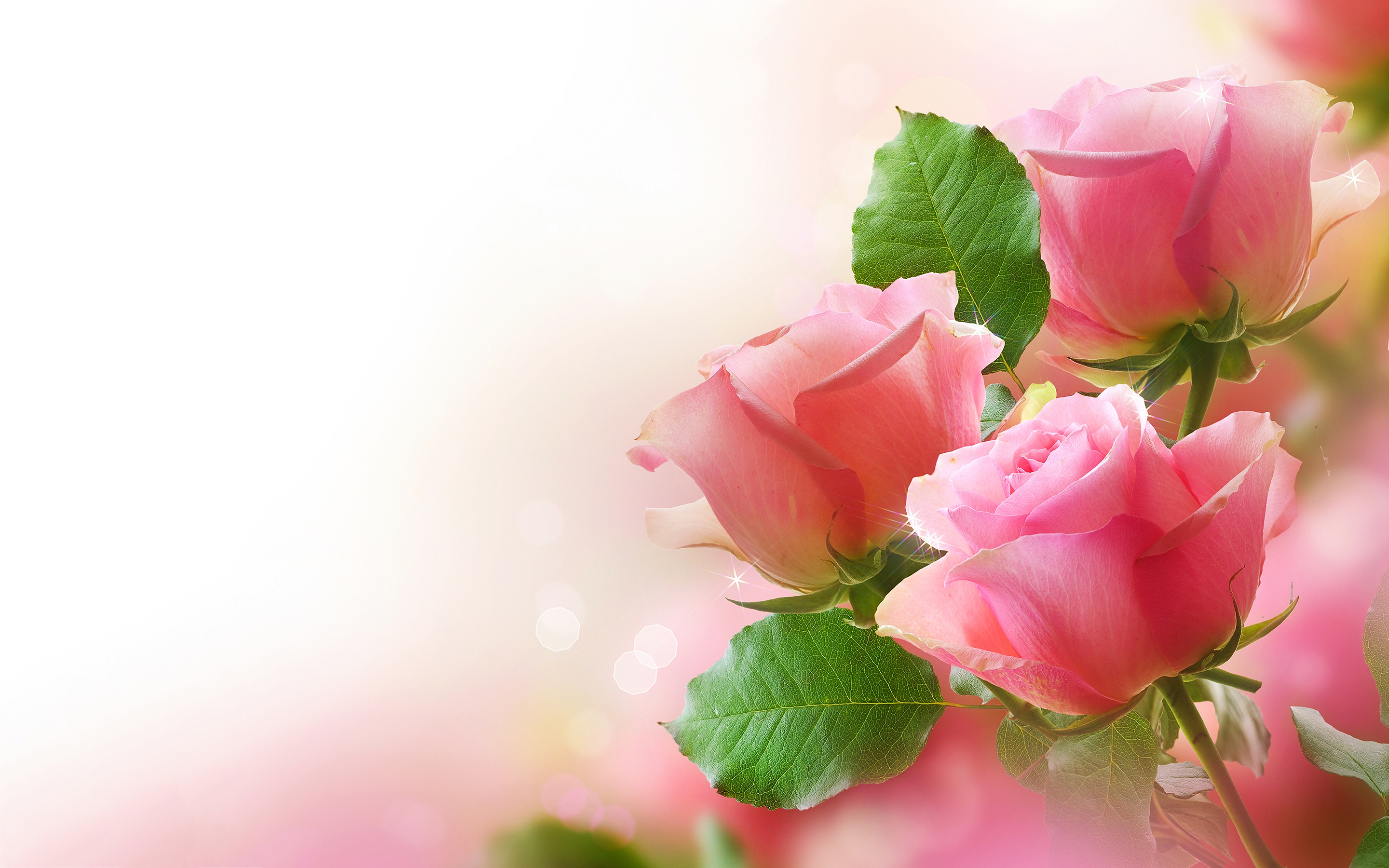 Roses Pretty Pink RosesRed Roses Wallpaper Desktop Background