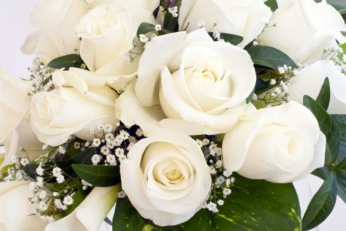 Roses wallpaper with a bouquet, a camellia, and a rose titled Pure White Roses