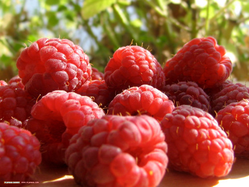 Red Raspberries <3