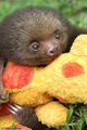 Sloth  - animals photo