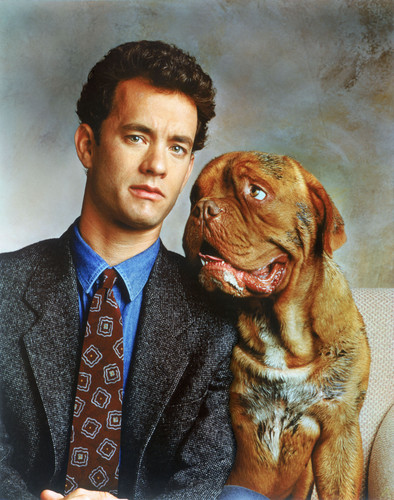 Turner & Hooch. . HD Wallpaper and background images in the Tom Hanks ...