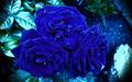 awesome blue rosas