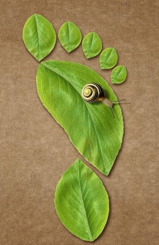 caracol on a leaf
