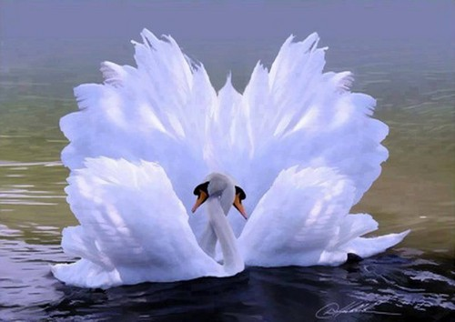 Beautiful Pictures achtergrond titled zwaan-, zwaan love :)