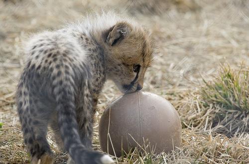 cute animal تصاویر