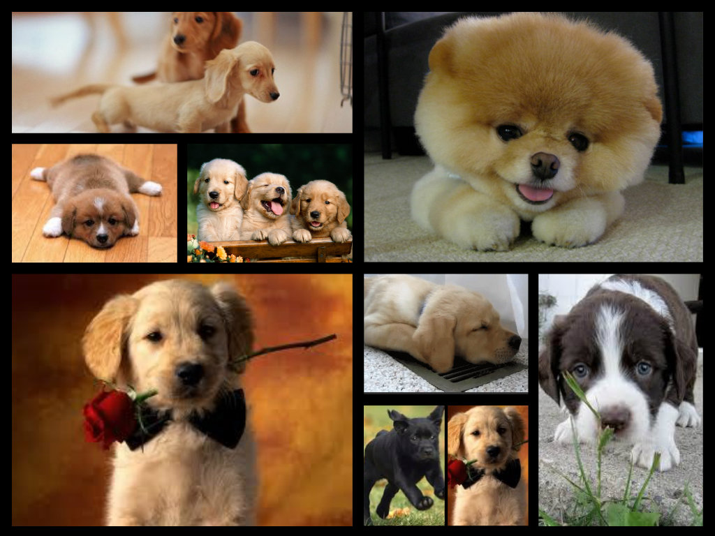 2638 Best Cute Dogs and Puppies images  Cute puppies