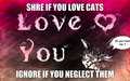 love cats dont neglect - kittens photo