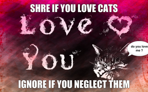 love cats dont neglect