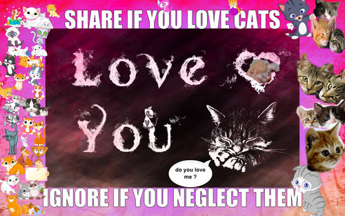 share if u love cats and kittens