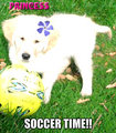 soccer time - fanpop-pets fan art