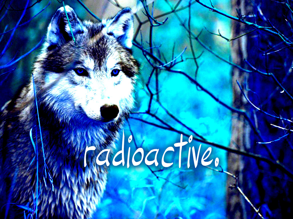 wolf wallpaper yorkshire - photo #35
