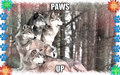 wolves on the loose - fanpop-pets fan art