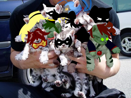 young justice kucing