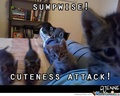 Attacked by the Cute Kittens!!! - animal-humor photo