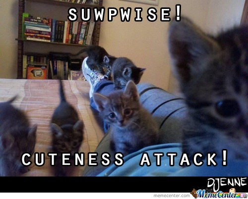 Attacked by the Cute Kittens!!!