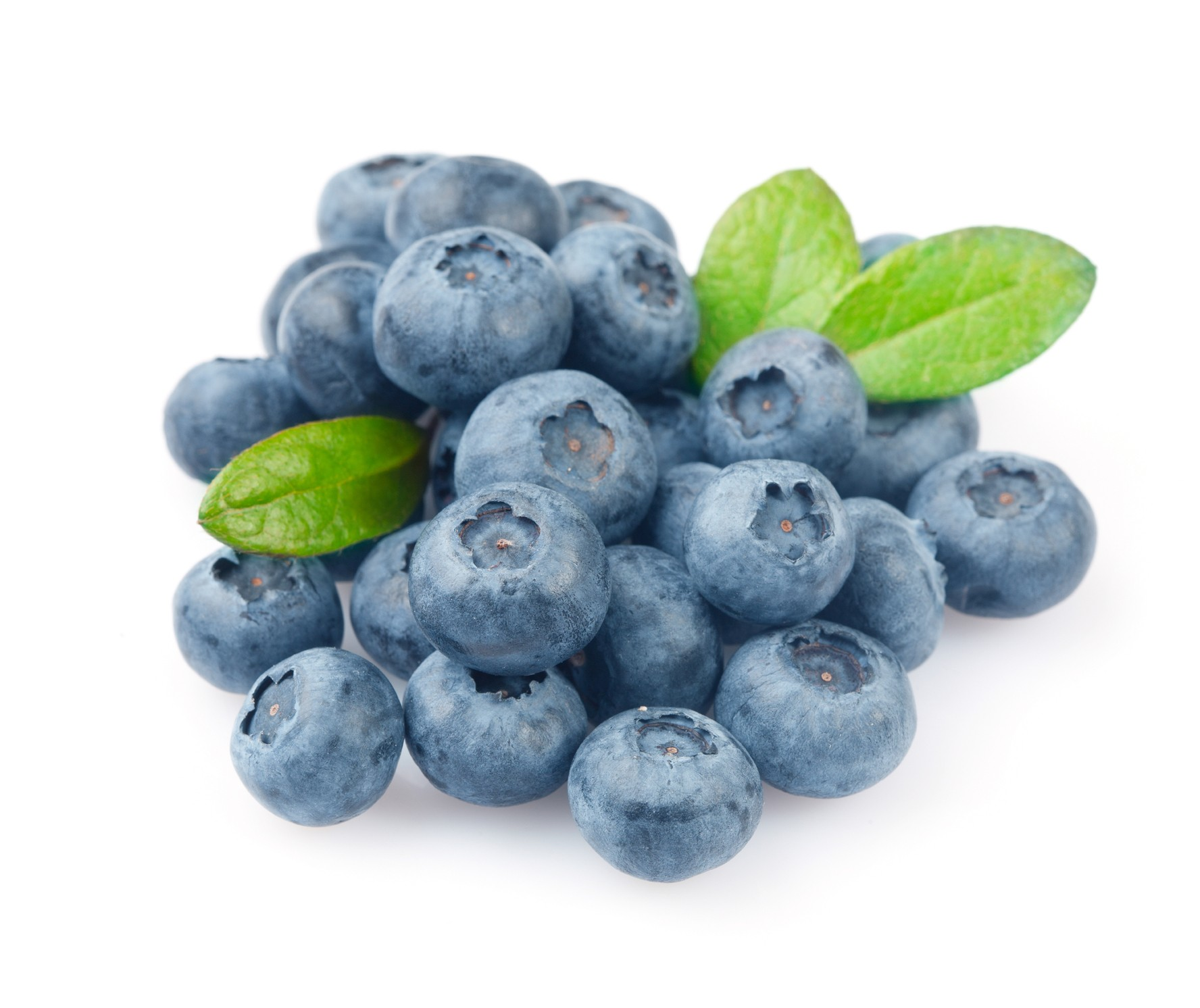 Blueberry - Fruit Photo (34733305) - Fanpop