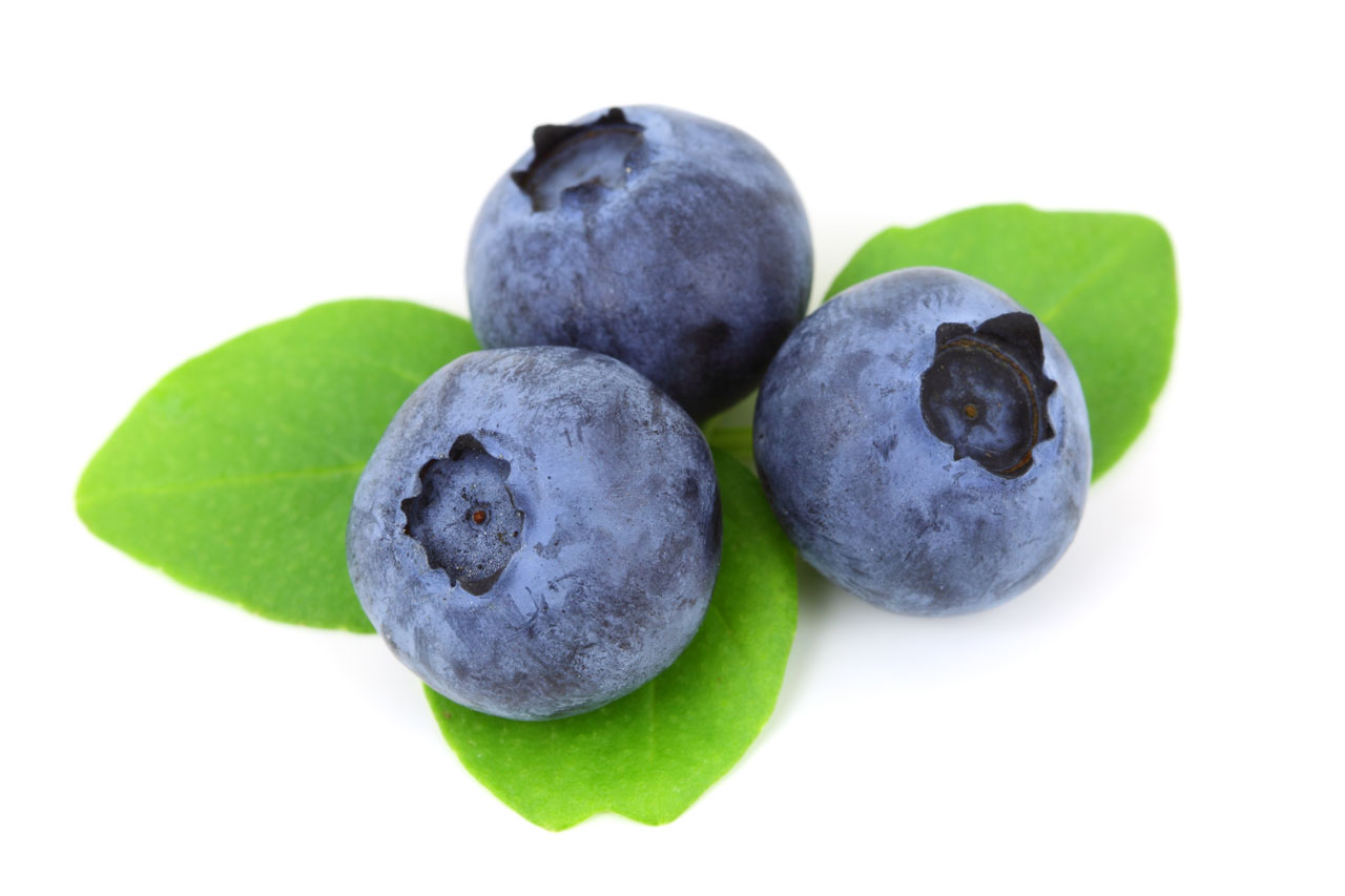 Blueberry - Fruit Photo (34733311) - Fanpop