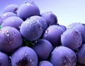 Blueberry - fruit photo
