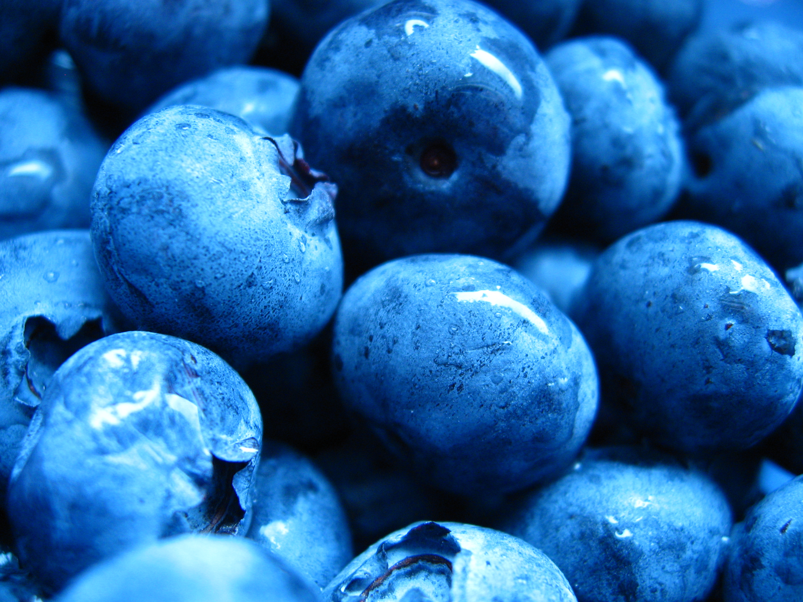 Blueberry - Fruit Photo (34733368) - Fanpop