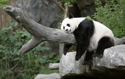 Cute Black and White Panda