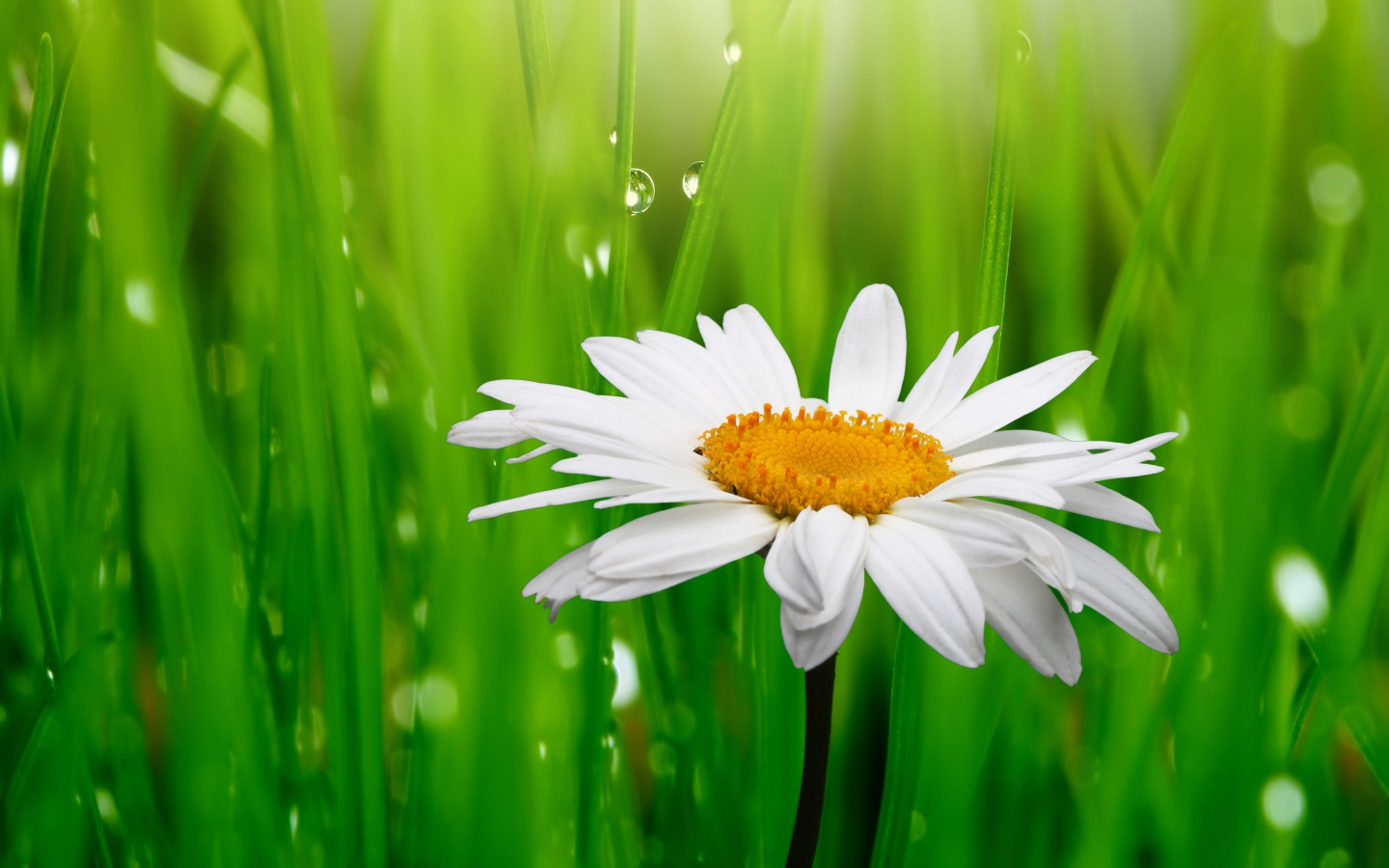 Flowers images daisy hd wallpaper and background photos - Wallpaper photos ...
