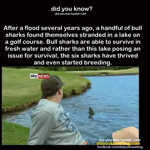 Did 당신 Know?